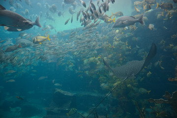 Nassau, Bahamas - MAY 2, 2018: Marine Habitat aquarium in the Atlantis Paradise Island resort, located in the Bahamas