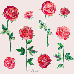 Red roses with green leaves and stems on a white background. Imitation of watercolor. Vector illustration.