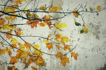 Herbstblätter vor Betonwand