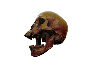 Human skull on White Background. The concept of death, horror. A symbol of spooky Halloween. 3d rendering illustration.Scan SCSU VizLab https://www.thingiverse.com/scsuvizlab/about - (CC Attribution)
