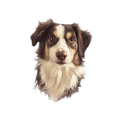 Realistic Portrait of Australian Collie, shepherd dog. Head of a cute puppy isolated on white background. Animal art collection: Dogs. Hand Painted Illustration of Pet. Design template. Good for print