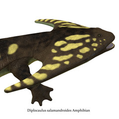 Diplocaulus Amphibian Head with Font - Diplocaulus was an amphibian that lived in the Permian Period of North America and Africa.