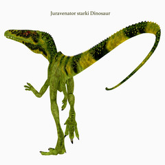 Juravenator Dinosaur Tail with Font - Juravenator was a carnivorous theropod dinosaur that lived in Germany during the Jurassic Period.