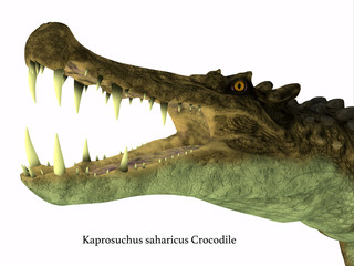 Kaprosuchus Reptile Head with Font - Kaprosuchus was a carnivorous crocodile that lived in Niger, Africa during the Cretaceous Period.