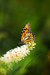 Butterfly on a flower on a dark background in the sun