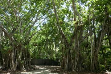 Jungle Vines 1