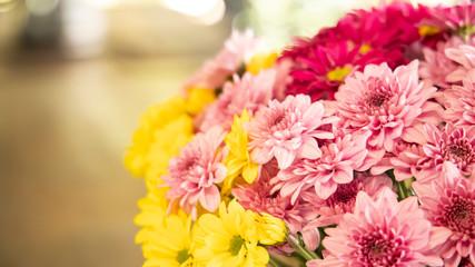 Beautiful Chrysanthemum flowers in the nature
