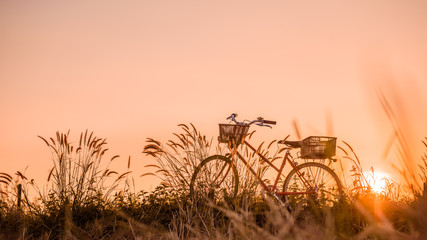 Wall Murals Deep brown beautiful landscape image with Bicycle at sunset