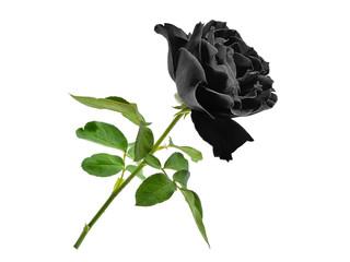 zwarte roos met blad geïsoleerd op witte achtergrond