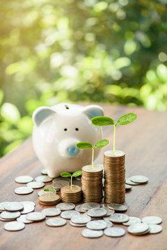 Close up of stacking money coins and piggy bank, the saving with growing your money to real estate owner in the future concept.