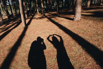 Shadow of Couple in Love on the floor among the tree. Pine tree forest in pan oung, Thailand