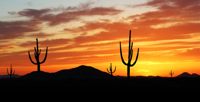 Southwest Desert - Colorful Sunset in Wild West Desert of  Phoenix Arizona with Cactus