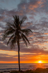 Palm tree and orange sunset over the ocean