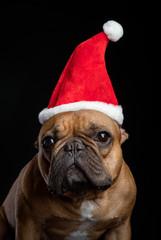 French bulldog santa
