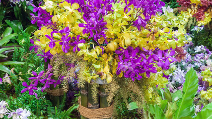 Blossom of pink and yellow orchids in garden