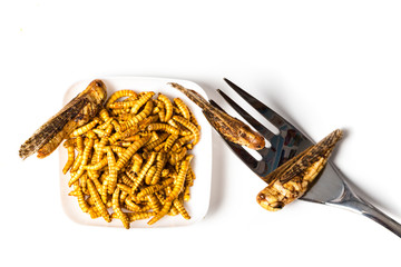 Edible fried insects suitable as food snack with fork white background