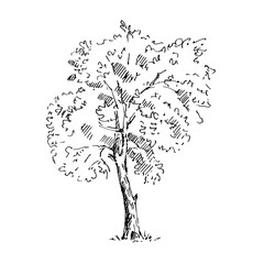 Hand drawn tree. Sketch. Vector illustration.