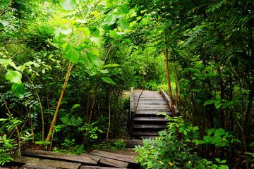 Wood walk in the jungle