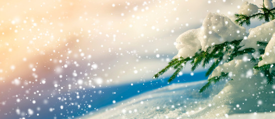 Spruce tree branch with green needles covered with deep snow and hoarfrost and large snowflakes on blurred blue colorful copy space background. Merry Christmas and Happy New Year greeting card.