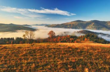 foggy morning in the Carpathian mountains. autumn foggy dawn