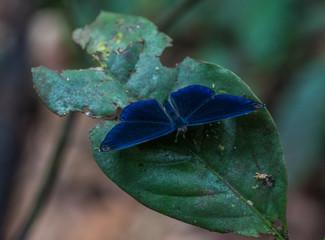 Amazon Rainforest Insect