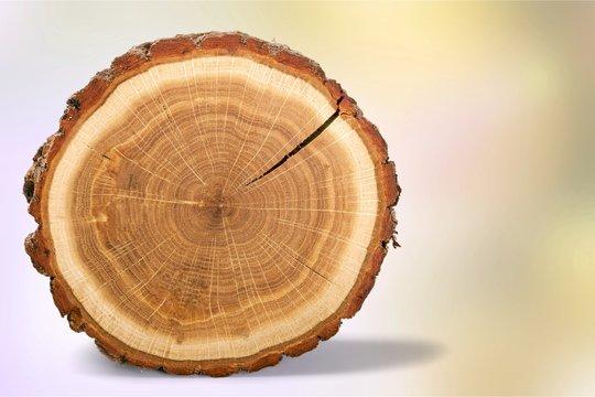 Wood round slice, isolated