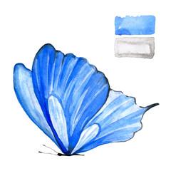 Blue butterfly in watercolor.