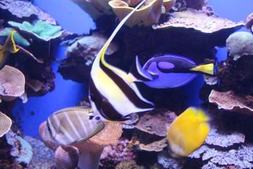 fisch, unter wasser, meer, koralle, reef,