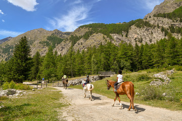 Scenic view of a mountain landscape with tourists horseback riding in a path, pine forest and rocks peaks in summer, Gran Paradiso National Park, Aosta Valley, Italy