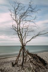 Baltic Sea coast with a knotty tree - long exposure