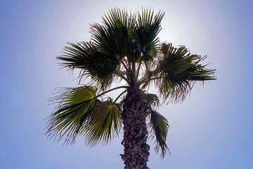 Palm tree and sky.