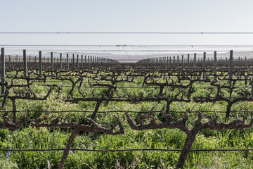 Spier Vineyards