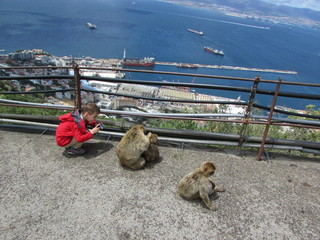 Boy make a photo of monkey and her baby on Gibraltar rock