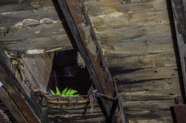 gruener farn auf einem dachgeschoss einer fabrik