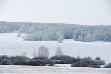 Winter landscape with field and forest