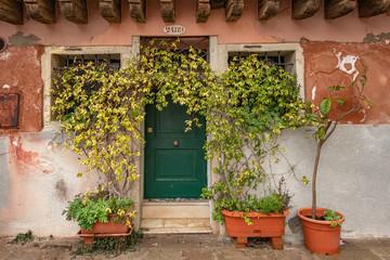 A doorway in Venice, Italy with overgrown pot plants.