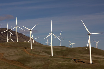 A field of windmills work to generate electricity