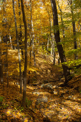 Dry Rocky Stream Bed with Yellow Fall Leaves