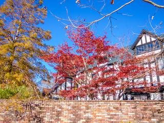 【静岡県伊豆市】秋のテーマパークの風景【モミジ・修善寺虹の郷】