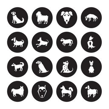16 vector icon set : Berger Picard dog, Akita Alaskan Klee Kai American Eskimo Dog Hairless Terrier Afghan Hound Basset dog isolated on black background