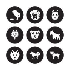 9 vector icon set : Tibetan Mastiff dog, St. Bernard Schipperke Schnauzer Shar Pei Shiba Inu Shetland Sheepdog Samoyed dog isolated on black background