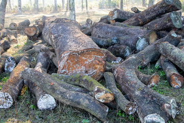 Timber wood pieces lying in forest, ready for transport