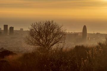 Amaneciendo en Barcelona con un árbol y la torre Agbar