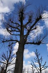 kahle Bäume ohne Laub im Winter