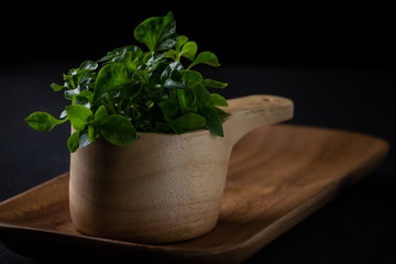Fresh watercress in the bowl