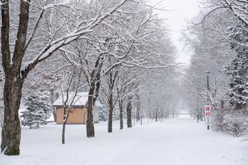 雪の降る緑ヶ丘公園の景色