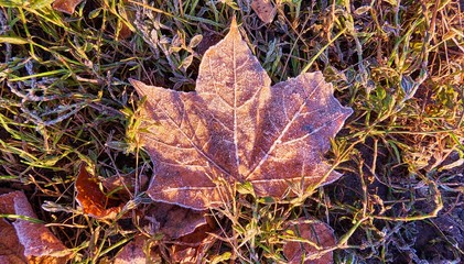 Sunny frozen leaves and grass on ground