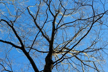 Under the bare tree branches with a bright blue sky.