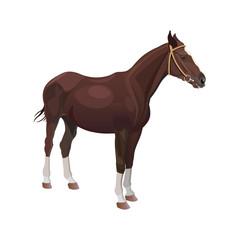 Bay horse vector