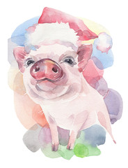 Cute piglet in Christmas hat, symbol of New Year 2019. Watercolor illustration.